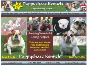 Bulldog breeder directory