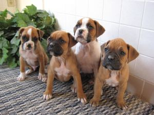 BoxersFor Sale for sale