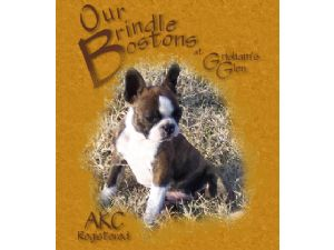 Boston TerrierFor Sale breeder directory