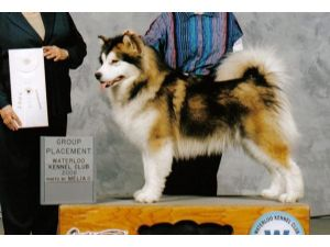 Alaskan Malamutes breeder directory