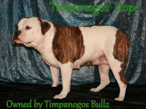 BulldogFor Sale breeder directory