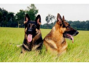 Dog Training Eustis Fl